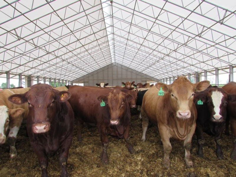 What are the benefits of a Livestock Shade Sail System?
