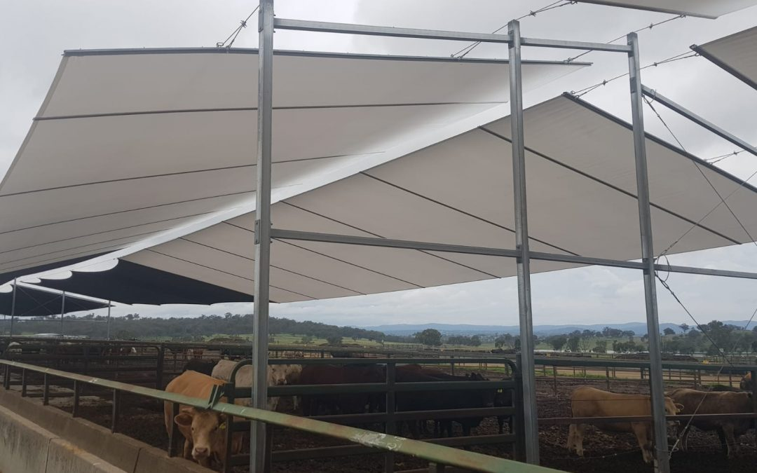 Architex shade trials focus on southern feedlots